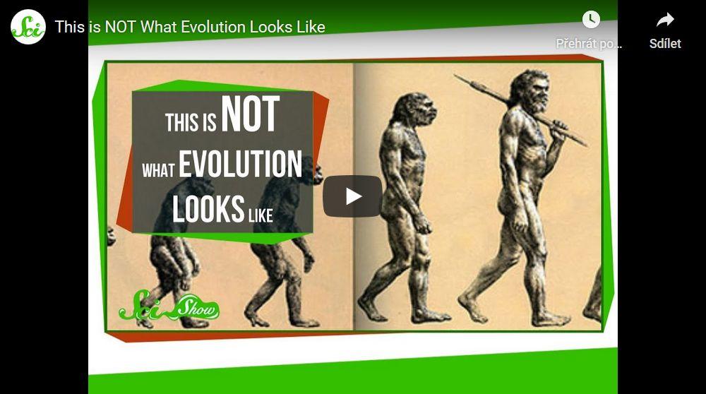 Takhle evoluce nevypadá…